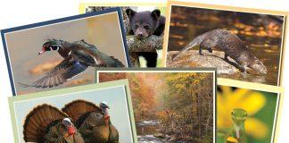 tennessee wildlife calendar