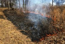 Prescribed Burn 2