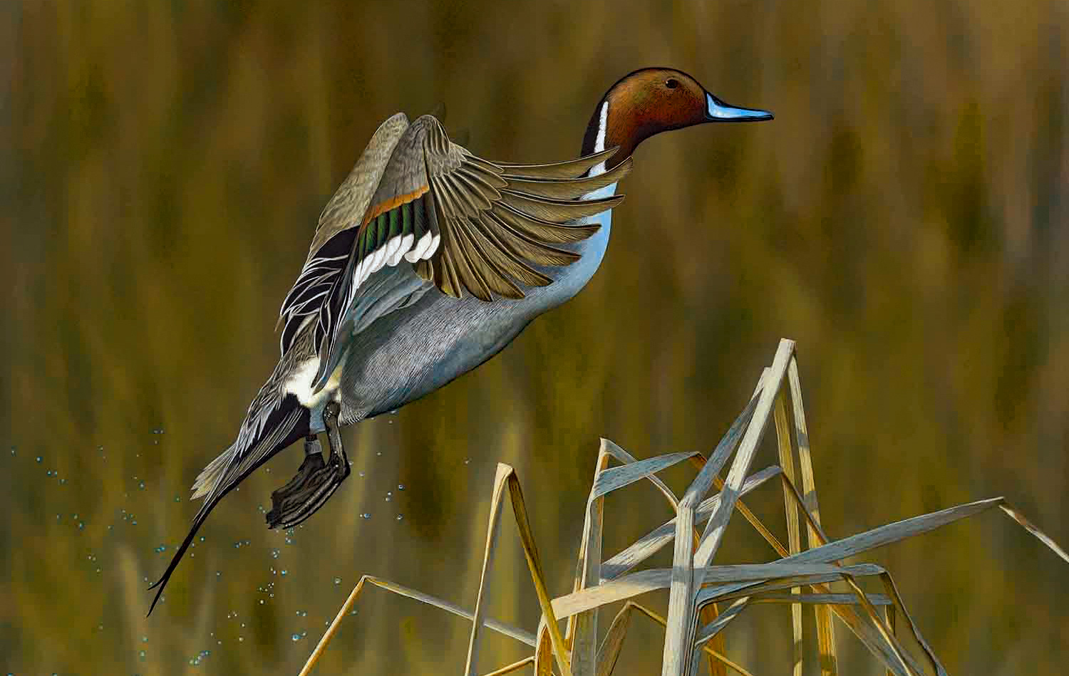 Amazing Hunts Offered at Ducks Unlimited Fundraiser