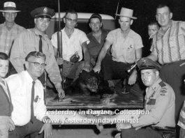 Black Bear in Dayton Tennessee