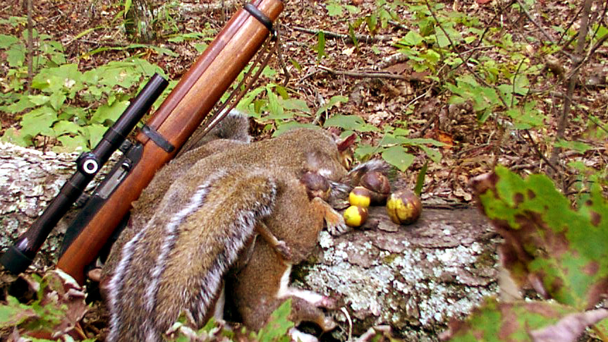 Free Hunting on Squirrel Opener Saturday, Aug. 22