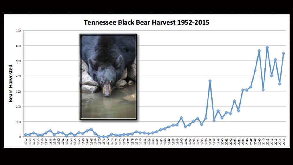 bear harvest