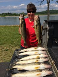 Candi Burrows shows of a two-person limit of walleye taken from Chickamauga Lake recently. (Photo: Contributed)