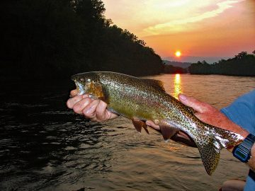 Clinch Rainbow Trout Sunset